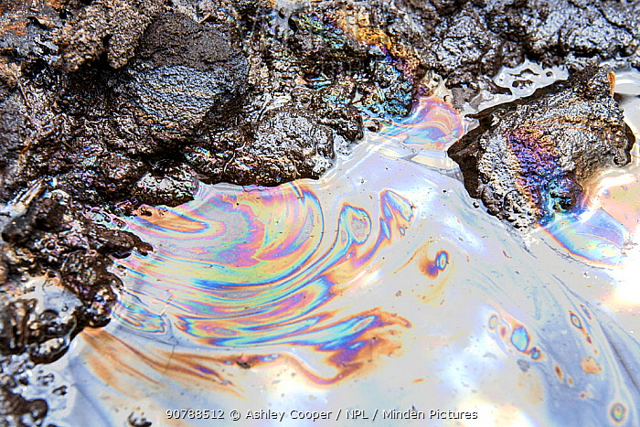 Tar sands with iridescent oil patterns. Alberta, Canada. August 2012