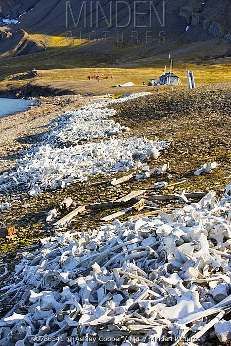 Pile of bones, the remains of hunted Beluga Whales (Delphinapterus leucas) at Bourbonhamna Svalbard, Norway, July 2013
