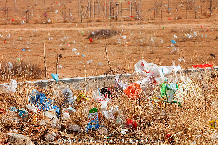 Plastic rubbish blowing across the desert landscape of Inner Mongolia, China. March 2009