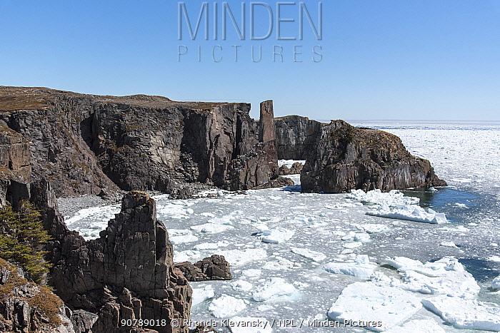 Coastline with sea stacks near Bonavista Newfoundland.  Unseasonal sea ice fills the bay. Canada, May 2017.