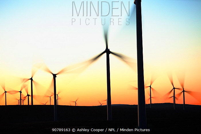 Dawn over Whitlee wind farm on Eaglesham Moor just south of Glasgow in Scotland, UK -  Europes largest onshore wind farm with 140 turbines and an installed capacity of 322 MW, enough energy to power 180,000 homes. October 2010