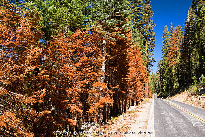 Wildfire damage in Yosemite National Park, California, USA. Most of California was in exceptional drought, the highest classification of drought, which  lea to an increasing number of wild fires. October 2014