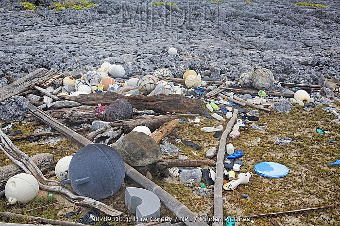 Marine litter - mostly shoes  (flip flops) and plastic bottles washed up on shore with Aldabra giant tortoise (Aldabrachelys gigantea). Cinq Cases, Aldabra Island, Indian Ocean