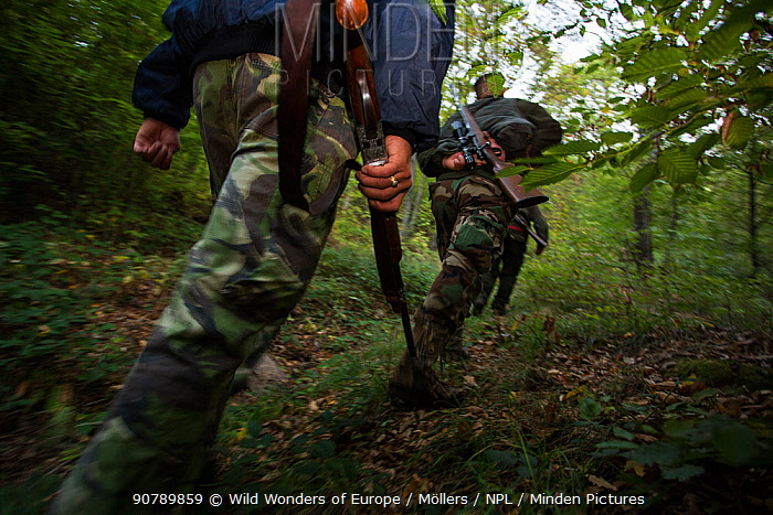 Romanian hunters during a driving hunt for Wild boar (Sus scrofa) in the forest area outside the village of Mehadia, Caras Severin, Romania, October 2012