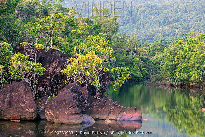 Lowland rainforest at the edge of a river with eroded rocks,  Masoala National Park, North eastern Madagascar.