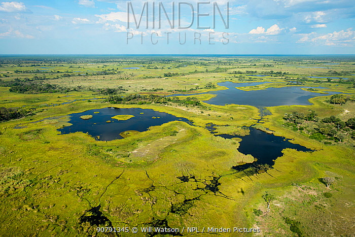 Aerial photograph of the Okavango Delta, UNESCO World Heritage Site, featuring, swamp, pools and channels created by Hippopotamus (Hippopatmus amphibious), Botswana. January 2018.