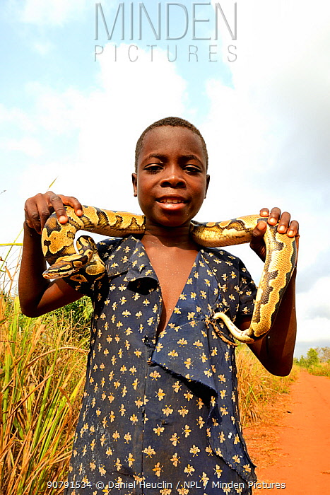 Young girl holding a Royal python (Python regius) Togo, February 2018.