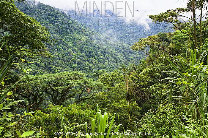 Montane rainforest, Braulio-Carrillo National Park, Costa Rica.