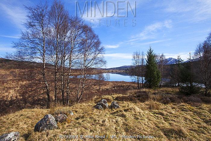 Loch Garry and Silver birch (Betula pendula) with Ben Tee beyond Lochaber, Highland Region, Scotland, March 2017