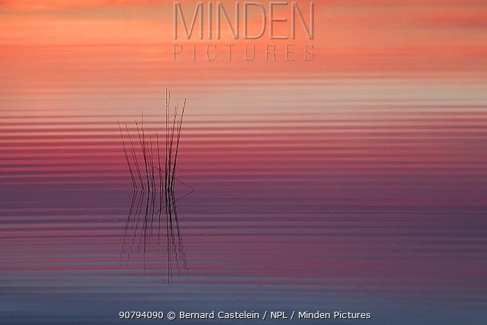 Sunrise reflected in water with ripples, Klein Schietveld, Brasschaat, Belgium