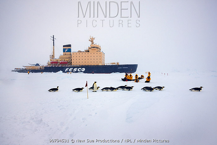 Emperor penguins (Aptenodytes forsteri) and tourists on sea ice in front of Russian icebreaker Kapitan Khlebnikov  in the sea ice near Snow Hill Island colony, Weddell Sea, Antarctica.