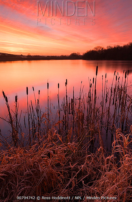 Lower Tamar Lakes, reflections and rushes, colurful winter sunrise, North Cornwall, UK. January 2018.