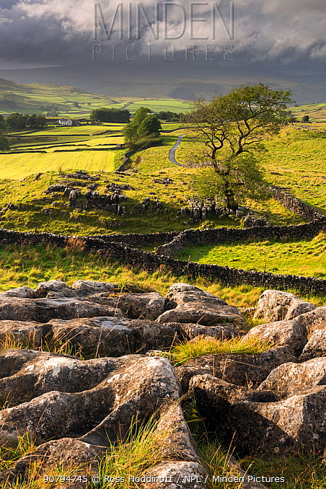 Malham Moor, with stormy skies over Winskill and Ribblesdale with Pen-y-Ghent shrouded in cloud, Yorkshire Dales National Park, UK. September 2017.