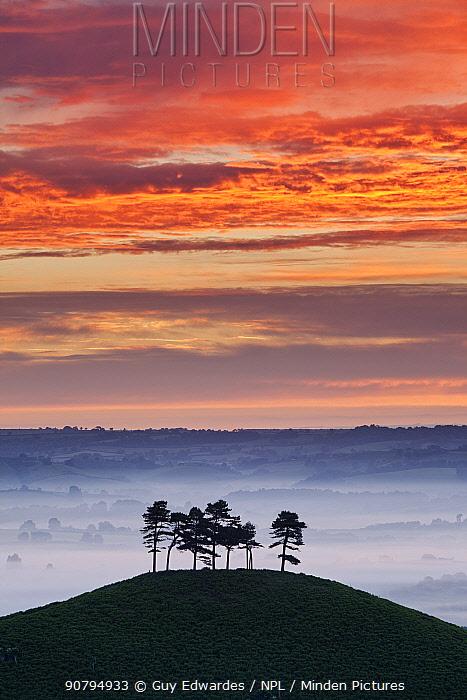 Sunrise over Colmer's Hill, Bridport, Dorset, England, UK. June 2010.