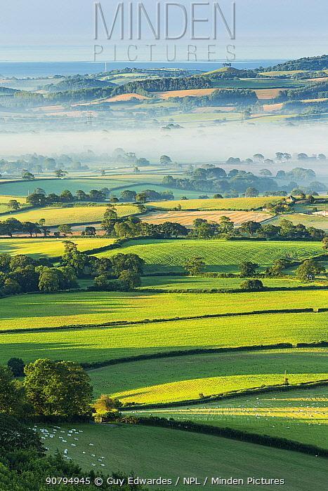Marshwood Vale in morning mist, Pilsdon Pen, Dorset, England, UK. July 2012.