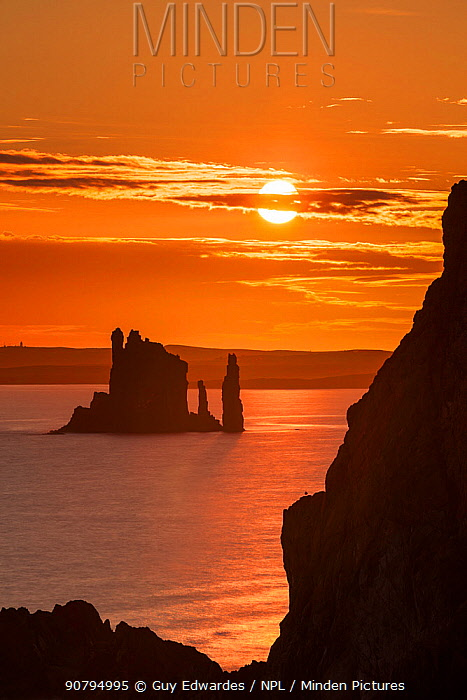 The Drongs sea stacks silhouetted at sunset, Hillswick, Northmavine, Shetland, Shetland Isles, Scotland, UK. August 2014.