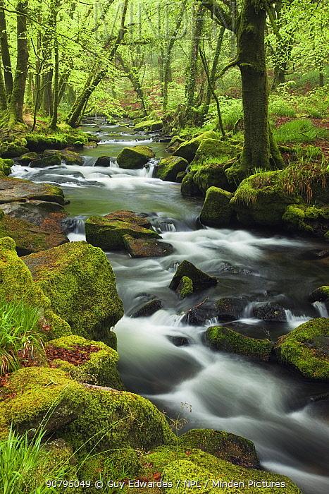 River Fowey at Golitha Falls, Bodmin Moor, Cornwall, England, UK. May 2010.
