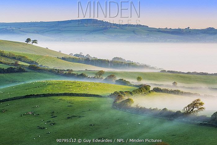 Pilsdon Pen and Marshwood Vale in morning mist, Quarr Hill, Dorset, England, UK. May 2014.