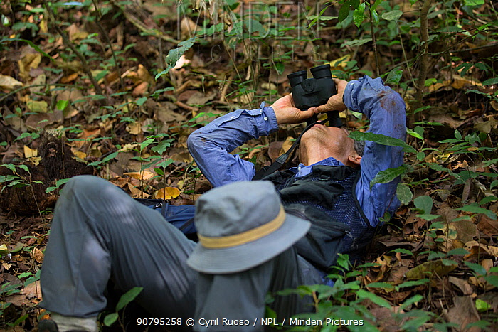 Professor Matsuzawa, primatologist, in the field. Republic of Guinea December 2012.