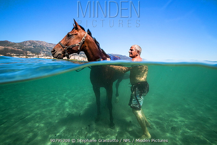 Man with horse cooling down in the Mediterranean sea, Corsica. August 2017.