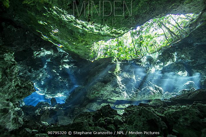 Underwater view of a cenote, Yucatan Peninsula, Mexico.