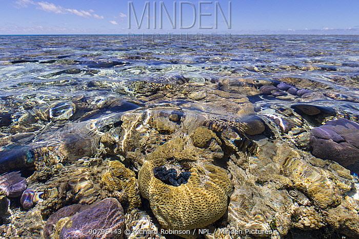 North Minerva Reef / Teleki Tokelau a disputed territory in the South Pacific between Tonga and Fiji.  January 2015.