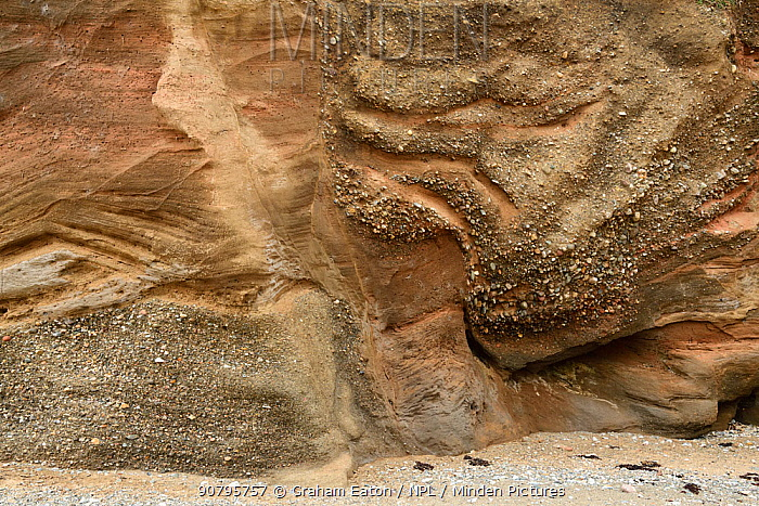 Glacial Sand and Gravel deposited within a kettle hole, Baumaris, Anglesey, Wales, UK, June. Sediment is deposited around a block of ice left near the front of a melting or retreating glacier. When the block of ice melts sediment is deposited into the void. In this image the gravel an the right hand side with a near vertical contact was deposited as the ice melted.