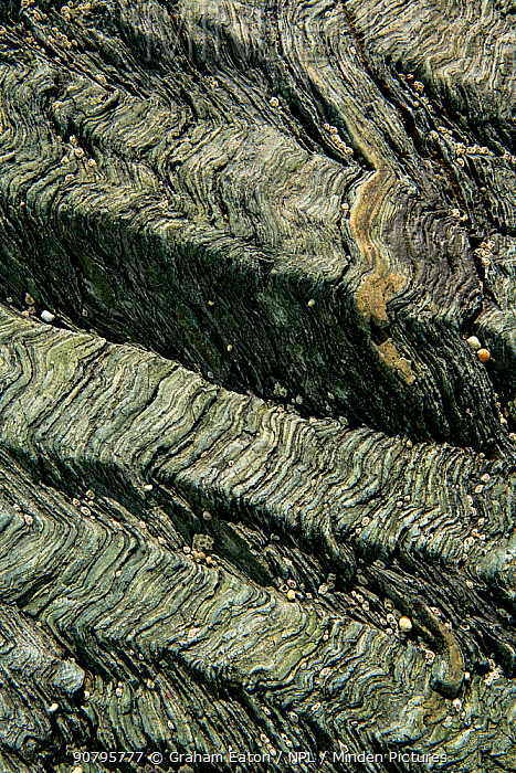 Crenulation cleavage developed in Pre-Cambrian age chlorite schist, a metamorphic rock Llyn, Wales, UK, May