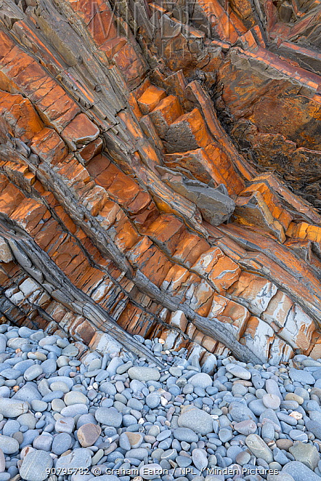 Tilted beds of Carboniferous age, Culm Measures (Bude Formation) sandstone and shale, Bude, Cornwall, UK, May.