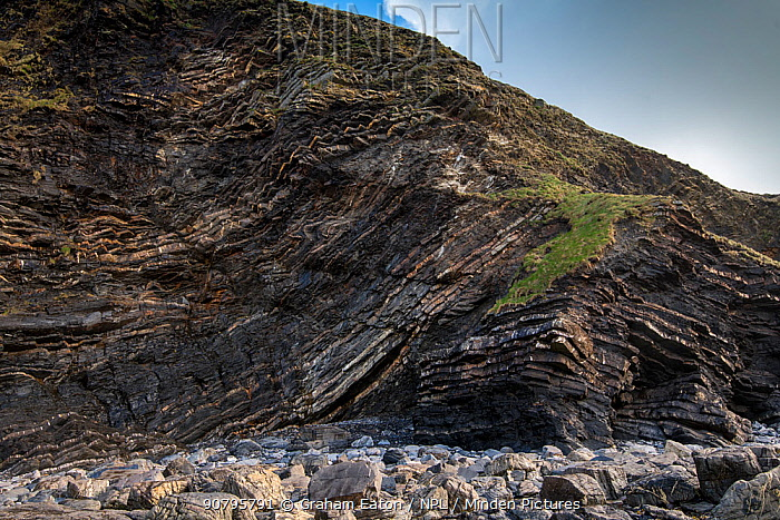A thrust fault in Carboniferous age Sandstones and shales (Culm Measures) at Crackington Haven, near Bude, Cornwall, March. The rocks comprise the Crackington Formation of thinly bedded turbidite sandstones and shales.