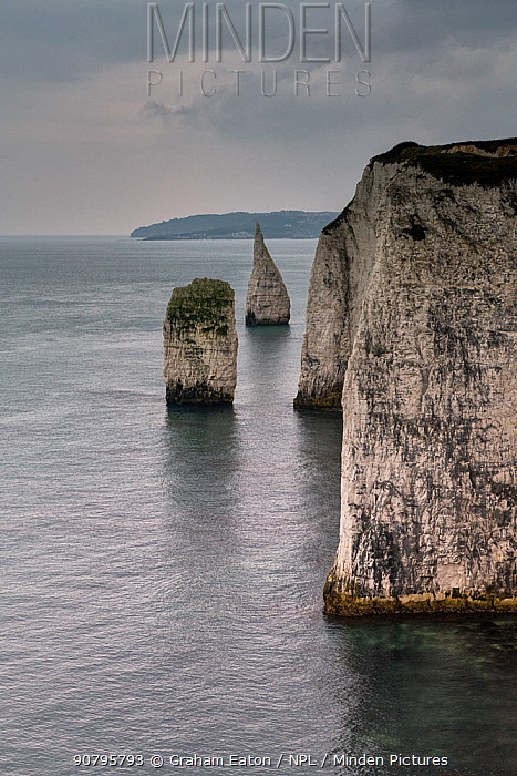 Sea Stacks of Cretaceous age Chalk near Old Harry Rocks, Studland, Dorset, March. These stacks are locally called The Pinnacles.