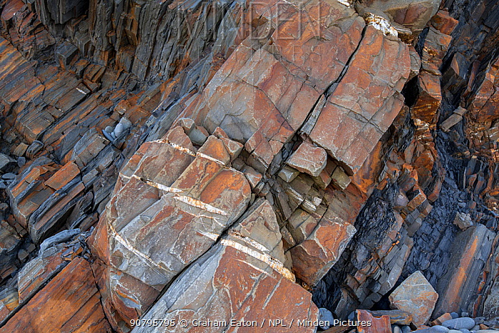 En echelon tension (or parallel) cracks in Carboniferous age turbidite sandstones, Bude, Cornwall, UK, May. The tension cracks have formed in the more competent sandstones as the rocks were folded. The mineral infil shows crystals growing in the direction that the crackes were opened.