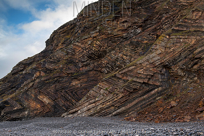 Chevron recumbent foldeding in Carboniferous age sandstone and shale (Culm Measures), deformed by compression during the Variscan or Hercynian orogeny, a geologic mountain-building event caused by Late Paleozoic continental collision between Euramerica (Laurussia) and Gondwana to form the supercontinent of Pangea. Millock Haven, near Bude, Cornwall, March