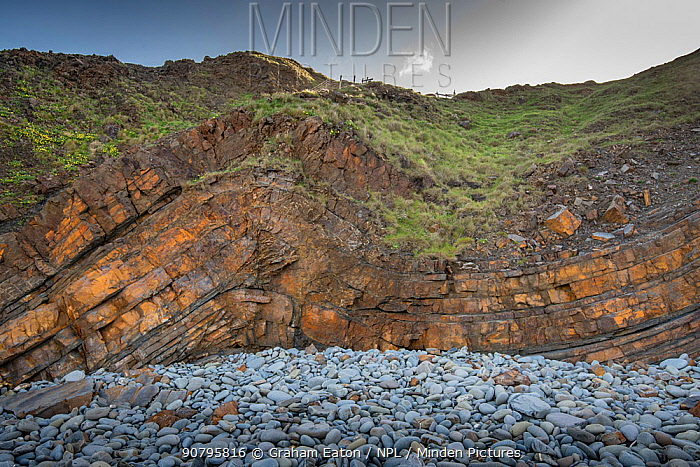 A monocline fold with a minor thrust fault in Carboniferous age sandstones, Bude, Cornwall, UK, May.