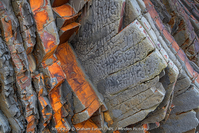 Load casts on the underside of a sandstone bed of Carboniferous age, Culm Measures (Bude Formation), Bude, Cornwall, UK, May.