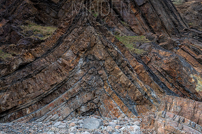 An anticline in deformed Carboniferous sandstones and shale (Culm Measures) near Bude, Cornwall, UK, March. These rocks were deformed during the Hercynian or Variscan Orogeny, a mountain building event caused by Late Paleozoic continental collision between Euramerica (Laurussia) and Gondwana to form the supercontinent of Pangea