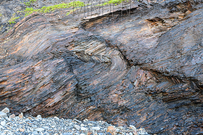 Conjugate kink bands in Carboniferous turbidite shales, Bude, Cornwall, UK, May