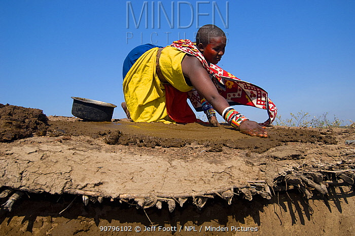 Maasai woman building a mud hut Maasai village, Kenya. September 2006.