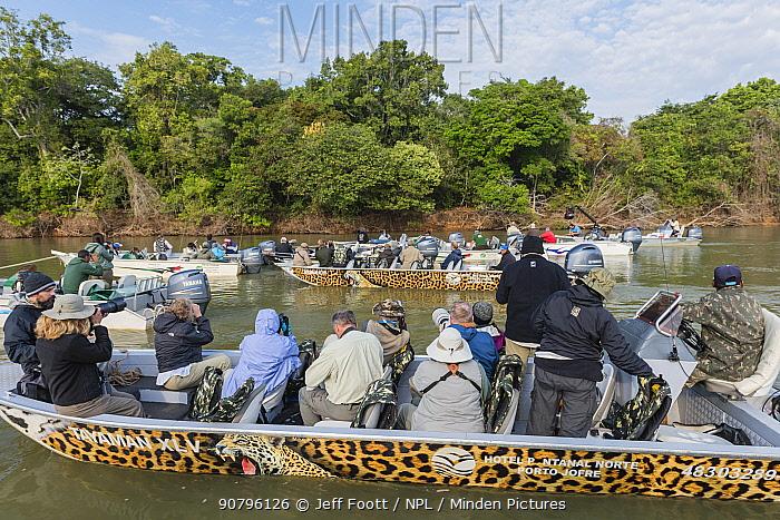 Jaguar (Panthera onca) being overcrowded by tourists, Cuiaba River, Pantanal Matogrossense National Park, Pantanal, Brazil.