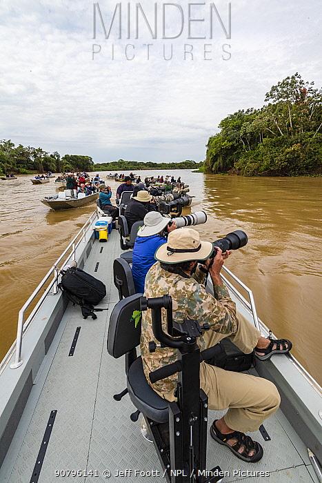 Jaguar (Panthera onca) being overcrowded by tourists, Pantanal Matogrossense National Park, Pantanal, Brazil.