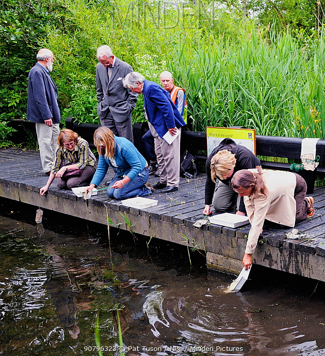 Adults from the London Natural History Society pond dipping at Camley Street nature reserve, King's Cross, London, UK, June 2009