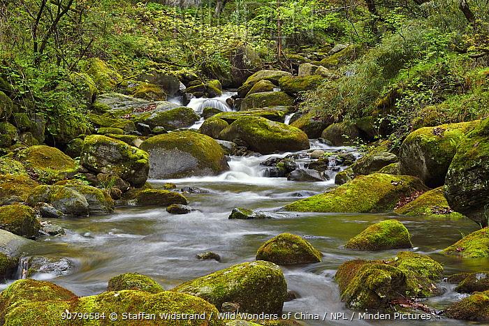 Small waterfalls, Tangjiahe National Nature Reserve,Qingchuan County, Sichuan province, China