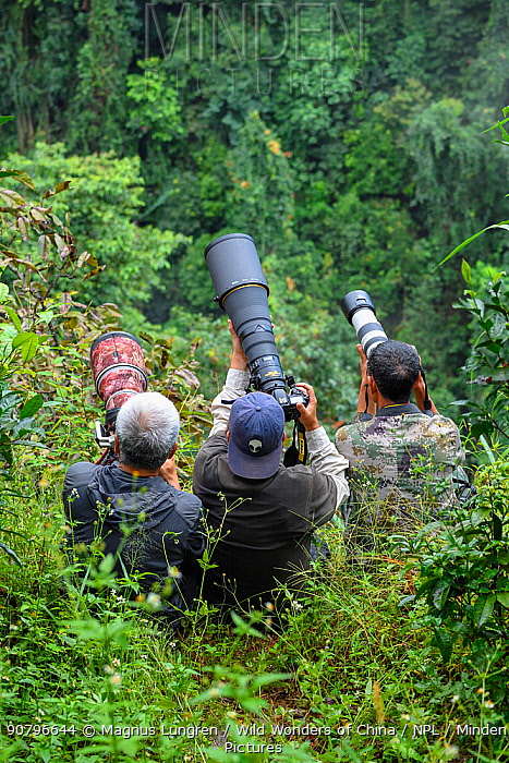 Three photographers photographing gibbons in Wuliangshan Nature Reserve, Jingdong, Yunnan Province, China. October 2017.