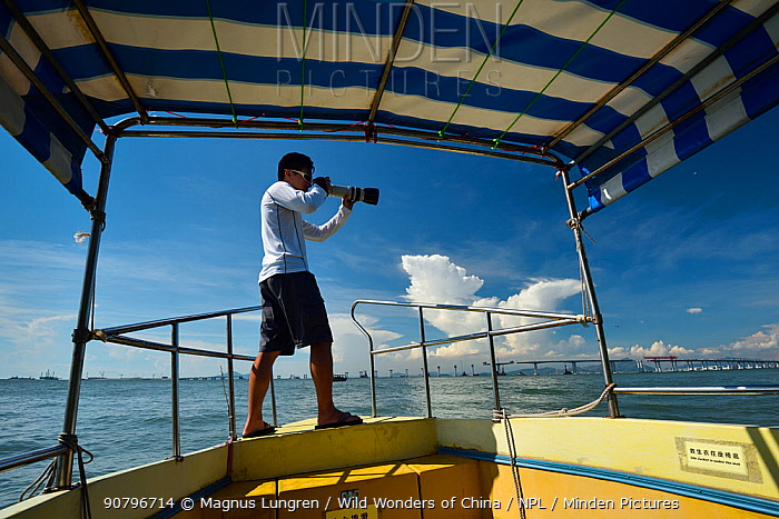 Researchers documenting Indo-Pacific humpback dolphin ( Sousa chinensis) individuals through photography outside Tai O, Lantau Island, Hong Kong, China