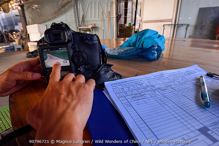 Scientists verifying data collected about the Indo-Pacific humpback dolphin (Sousa chinensis) nearby populations, Tai O, western side of Lantau Island, Hong Kong, China. June, 2016.