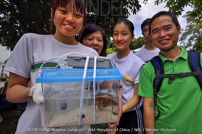 Secondary school students release a juvenile, age six months, Chinese horseshoe crab (Tachypleus tridentatus) that has been bred by City University of Hong Kong, Ha Pak Nai wetlands area Yuen Long District, Hong Kong, China. June 2016.