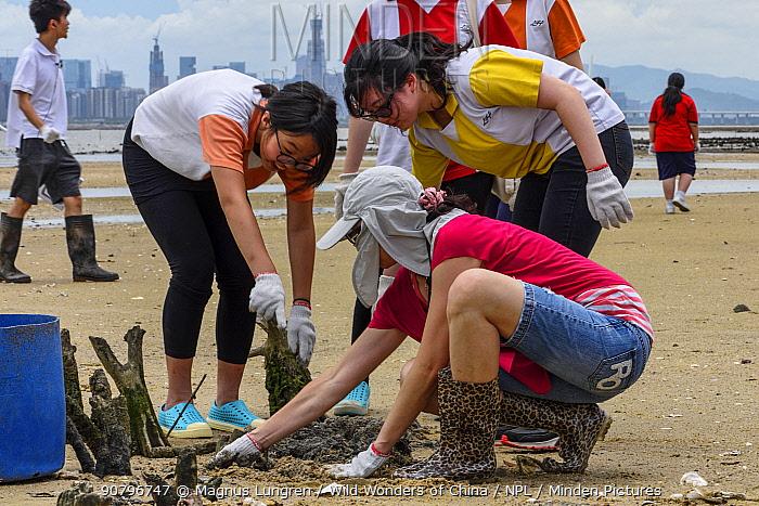 Secondary school students releasing juvenile Chinese horseshoe crabs (Tachypleus tridentatus) that has been bred by City University of Hong Kong, Ha Pak Nai wetlands, Yuen Long District, Hong Kong, China.). June 2016.