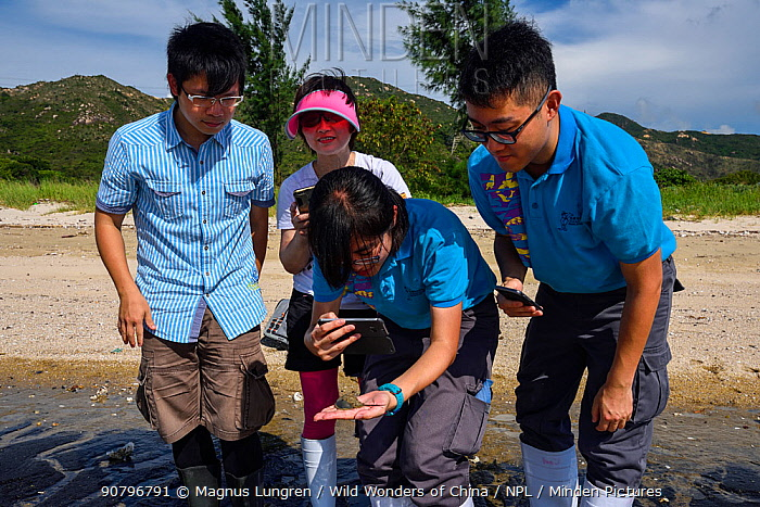 Staff from Ocean Park Conservation Fund, OPCF, and students visit Ha Pak Nai to see the juvenile Chinese horseshoe crabs, (Tachypleus tridentatus) Yuen Long District, New territories, Hong Kong, China. June, 2016.