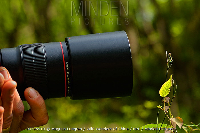 Photographer taking pictures of spider, Tangjiahe National Nature Reserve, Sichuan Province, China