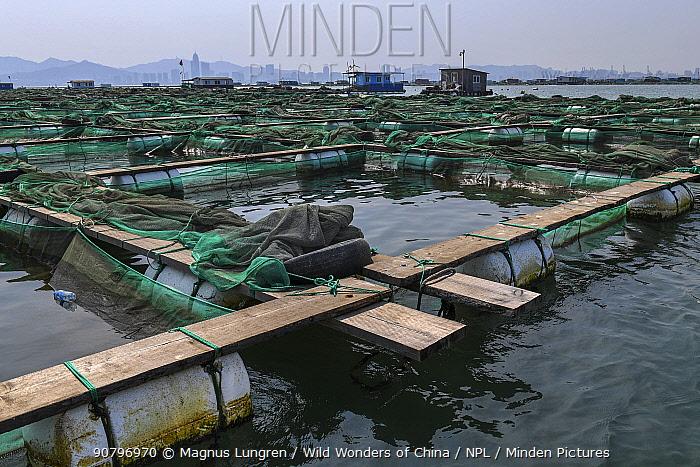 Fish and mussel farm. Zhifu Island, Shandong Province. Bohai Sea, Yellow Sea, China. September 2017.